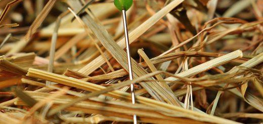 needle-in-a-haystack-1752846_1280